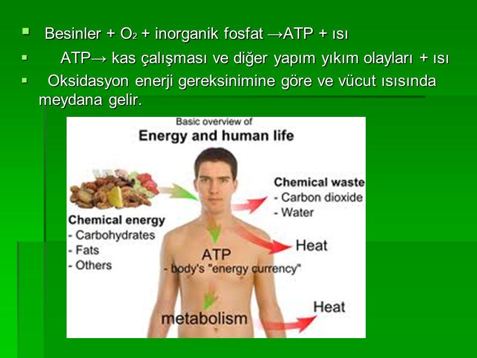 Besinler + O2 + inorganik fosfat →ATP + ısı