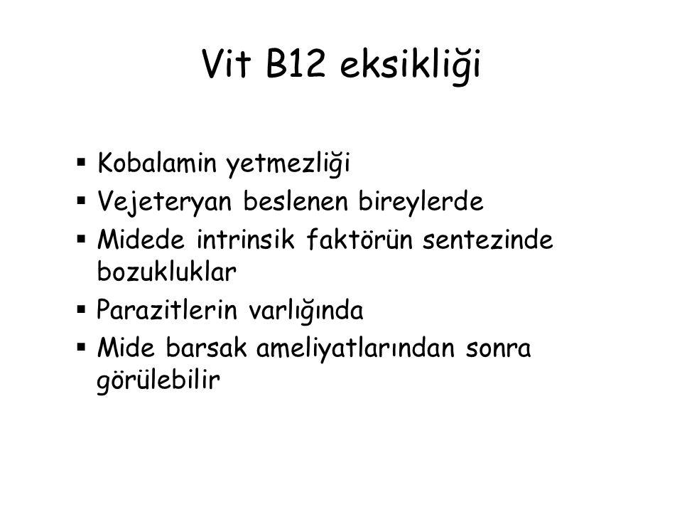 Vit B12 eksikliği Kobalamin yetmezliği Vejeteryan beslenen bireylerde