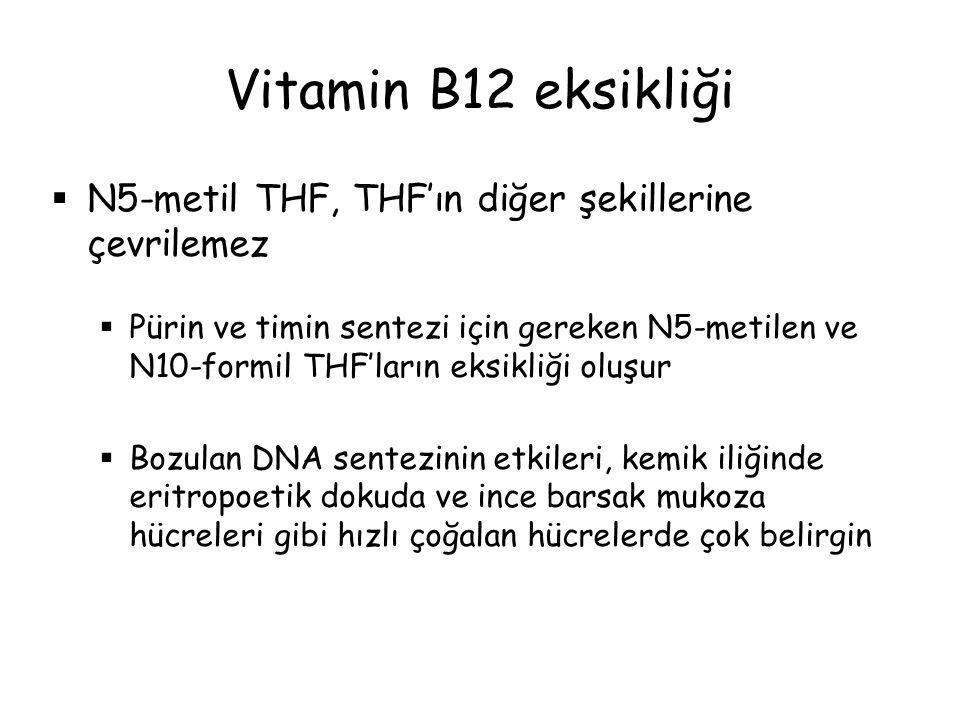 Vitamin B12 eksikliği N5-metil THF, THF'ın diğer şekillerine çevrilemez.