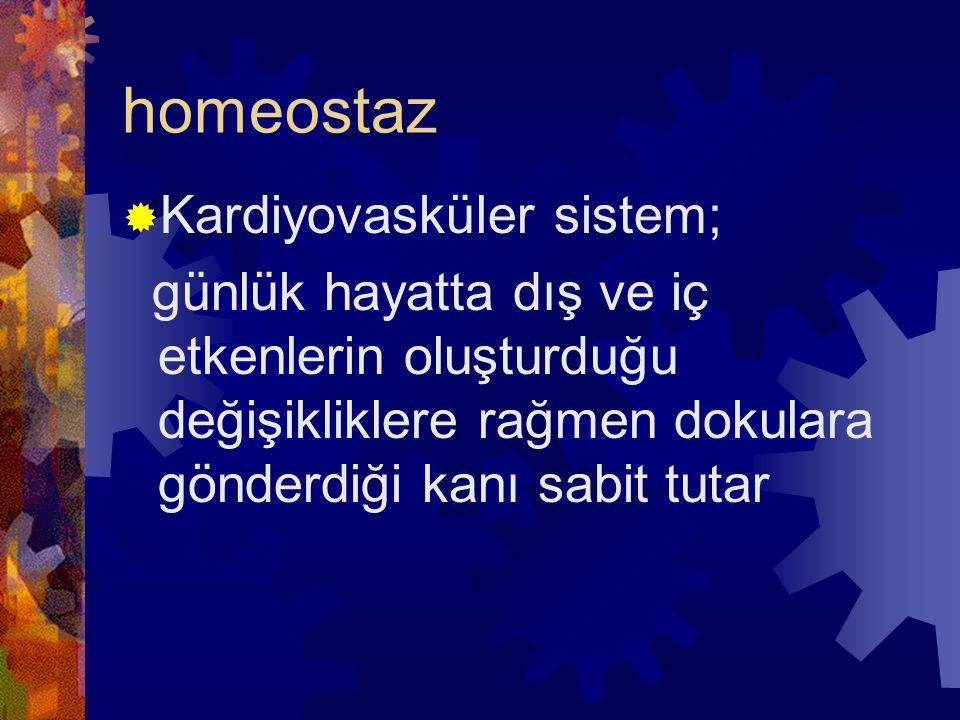homeostaz Kardiyovasküler sistem;