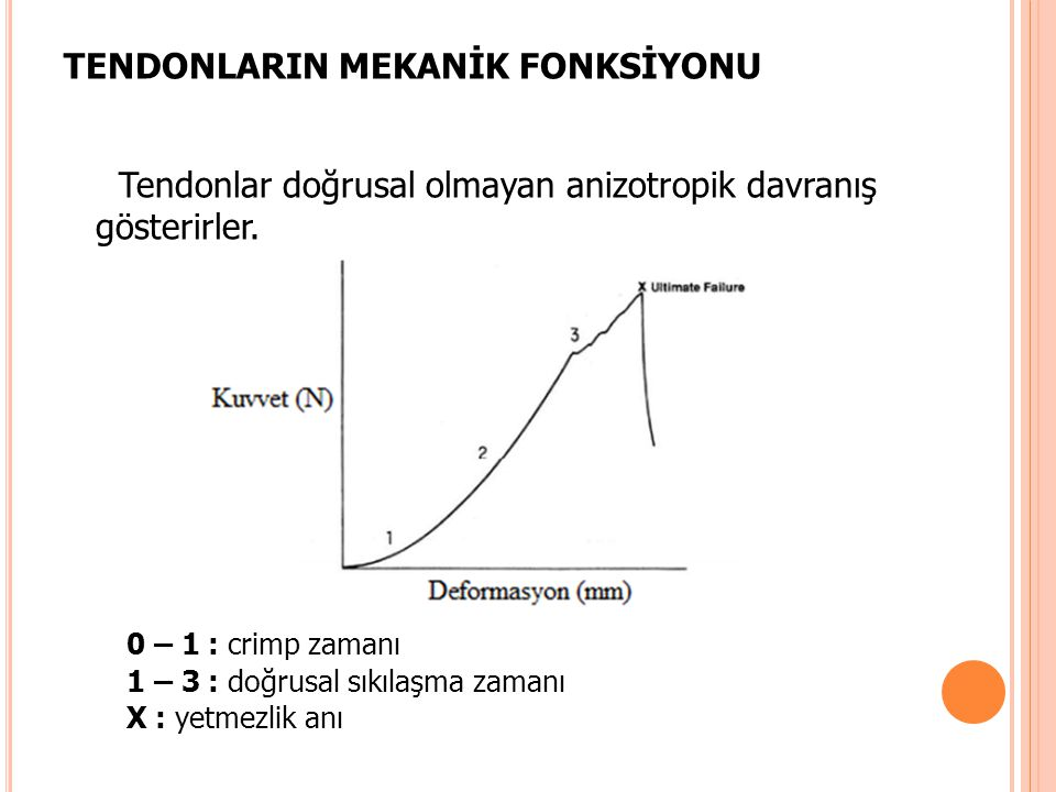 TENDONLARIN MEKANİK FONKSİYONU
