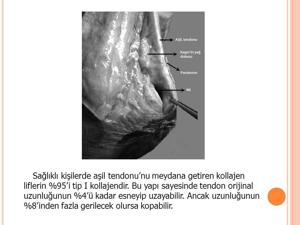 Sağlıklı kişilerde aşil tendonu'nu meydana getiren kollajen liflerin %95'i tip I kollajendir.