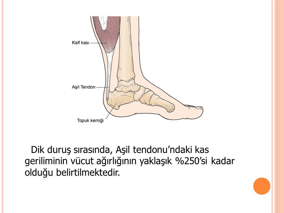 Dik duruş sırasında, Aşil tendonu'ndaki kas geriliminin vücut ağırlığının yaklaşık %250'si kadar olduğu belirtilmektedir.