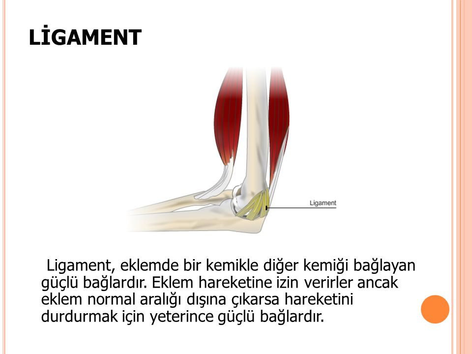 LİGAMENT