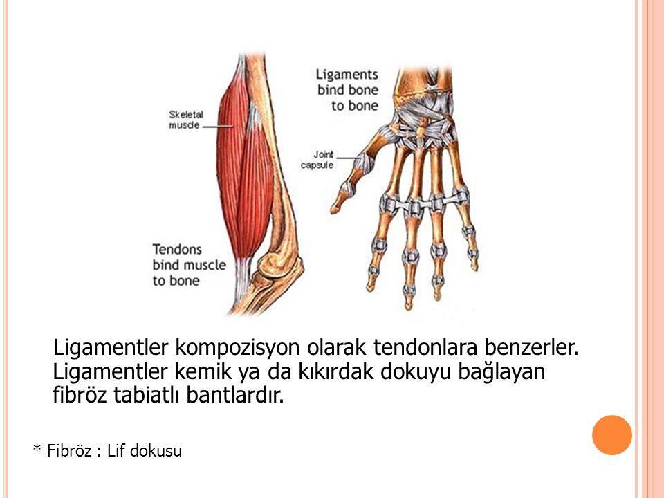 Ligamentler kompozisyon olarak tendonlara benzerler