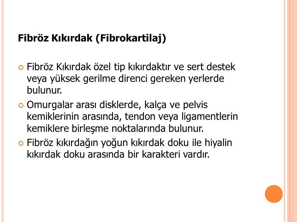 Fibröz Kıkırdak (Fibrokartilaj)