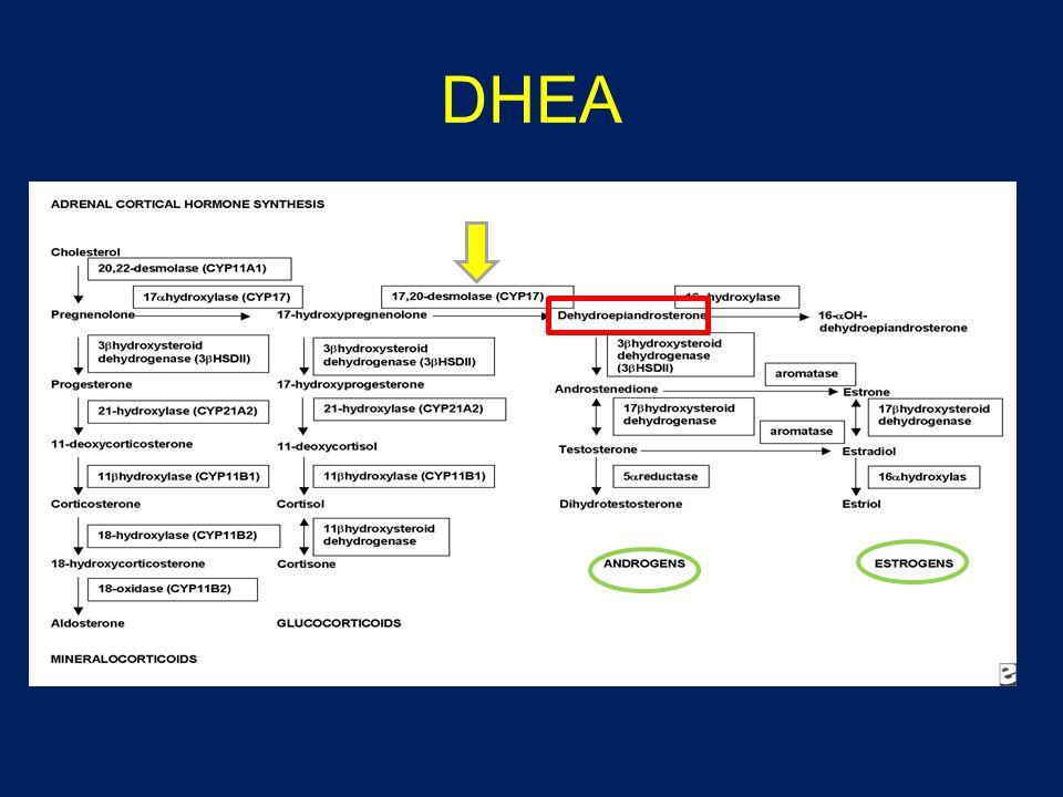 DHEA Ndrojenler Postmenopozal e kaynağı, ama t dönüşümü daha fazla, dhea immunmodülatuar etki+, gn ile oi sırasına adrenal dhea apımı azalır.