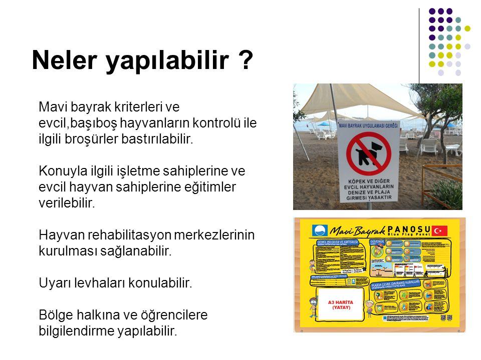 Neler yapılabilir Mavi bayrak kriterleri ve evcil,başıboş hayvanların kontrolü ile ilgili broşürler bastırılabilir.