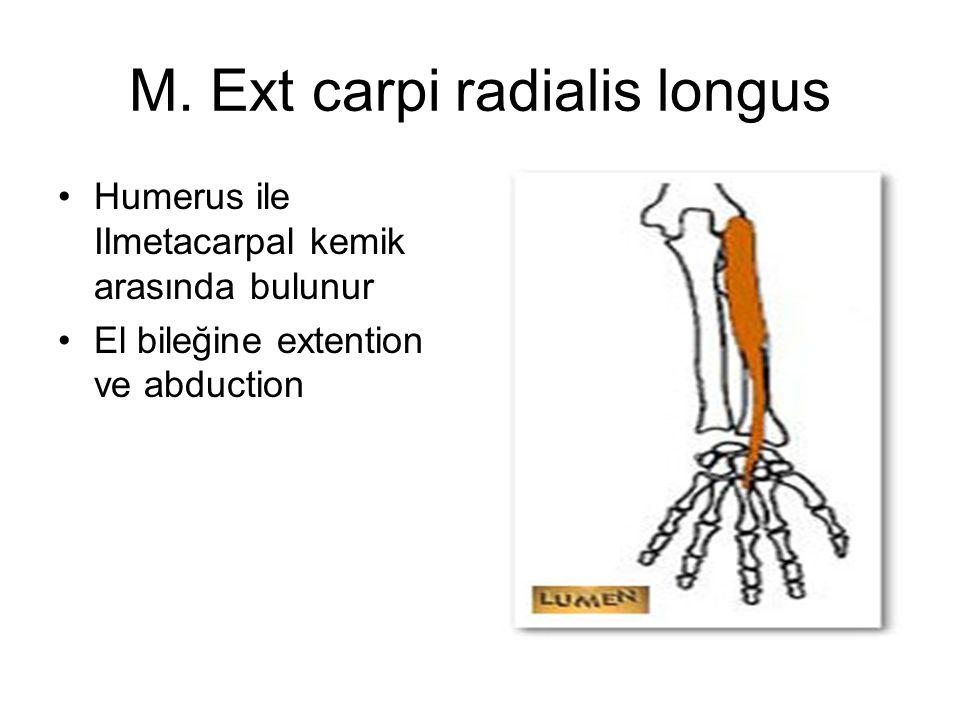 M. Ext carpi radialis longus
