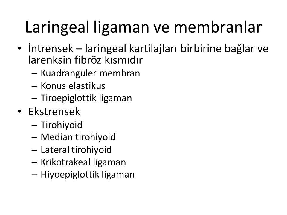 Laringeal ligaman ve membranlar