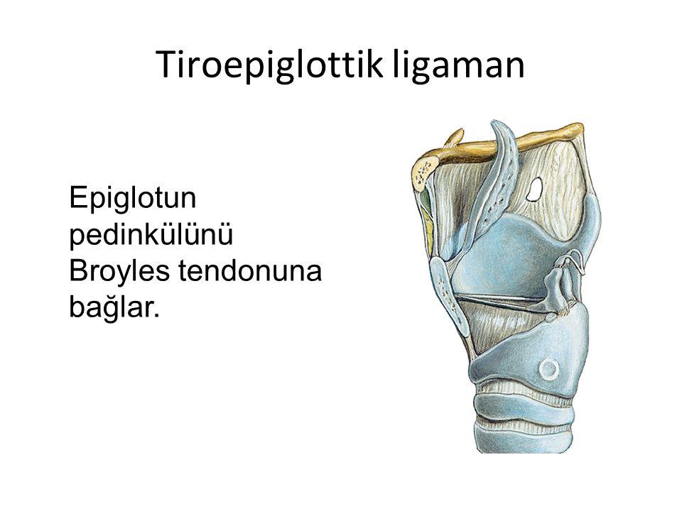 Tiroepiglottik ligaman