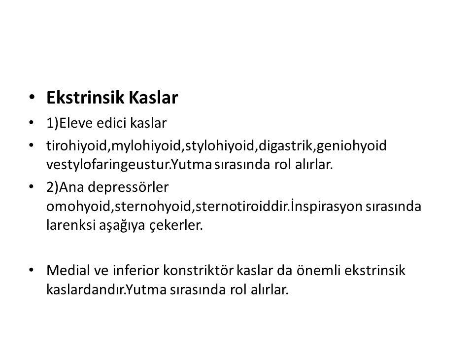 Ekstrinsik Kaslar 1)Eleve edici kaslar