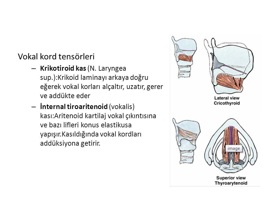 Vokal kord tensörleri Krikotiroid kas (N. Laryngea sup.):Krikoid laminayı arkaya doğru eğerek vokal korları alçaltır, uzatır, gerer ve addükte eder.