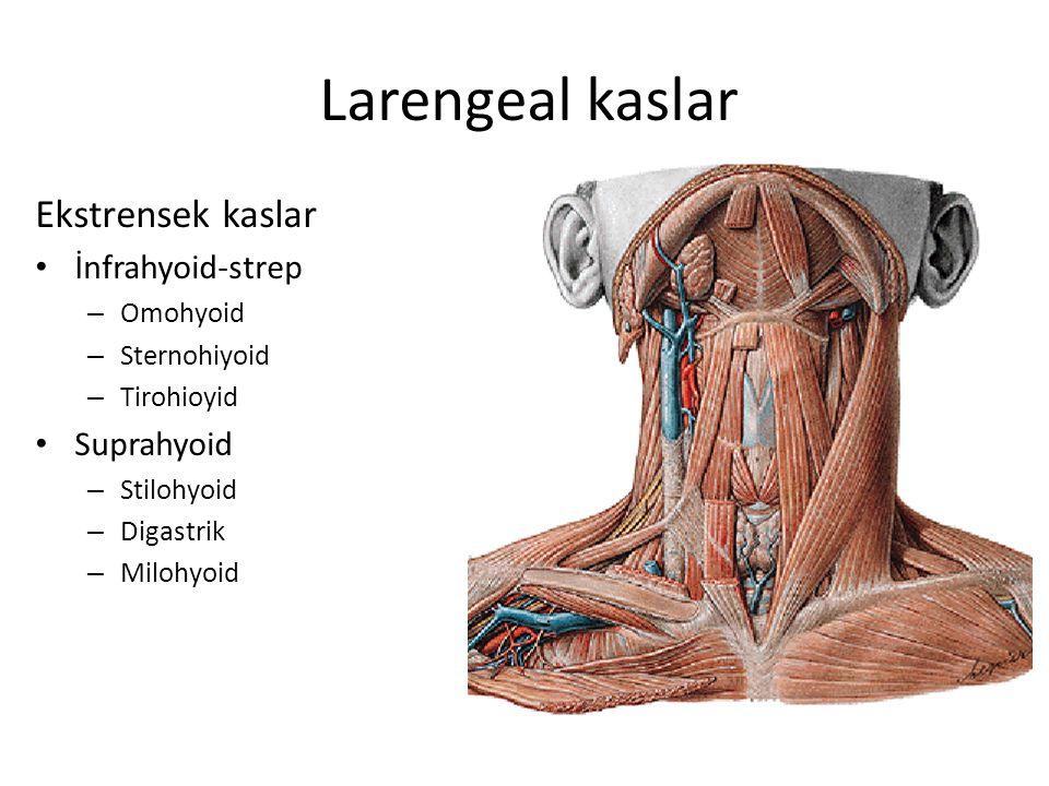 Larengeal kaslar Ekstrensek kaslar İnfrahyoid-strep Suprahyoid
