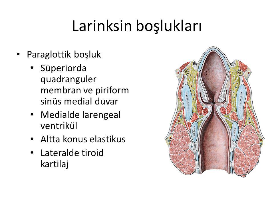 Larinksin boşlukları Paraglottik boşluk
