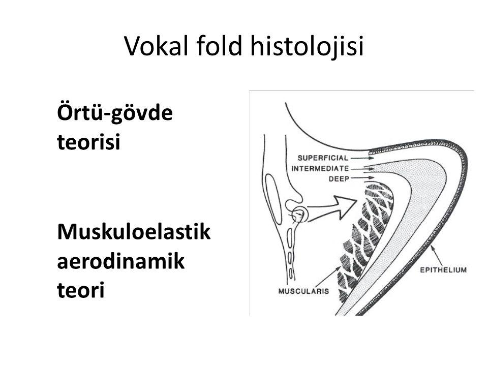 Vokal fold histolojisi