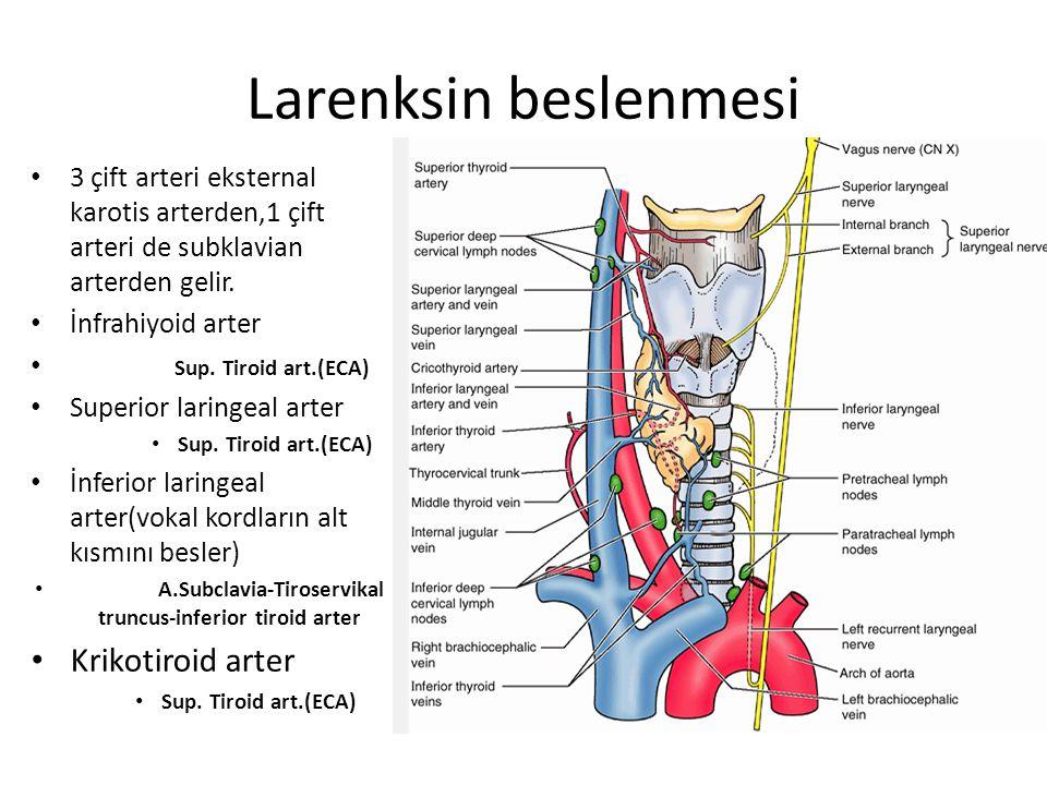 A.Subclavia-Tiroservikal truncus-inferior tiroid arter