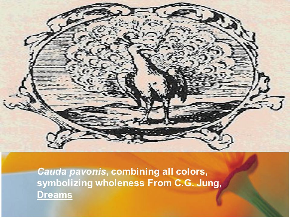Cauda pavonis, combining all colors, symbolizing wholeness From C. G