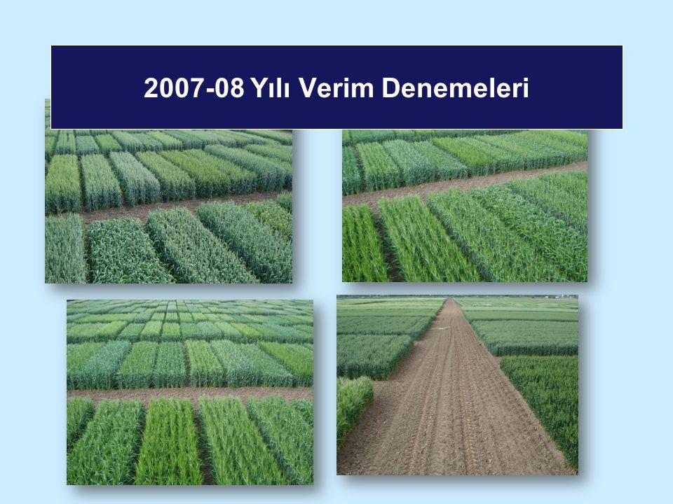 2007-08 Yılı Verim Denemeleri