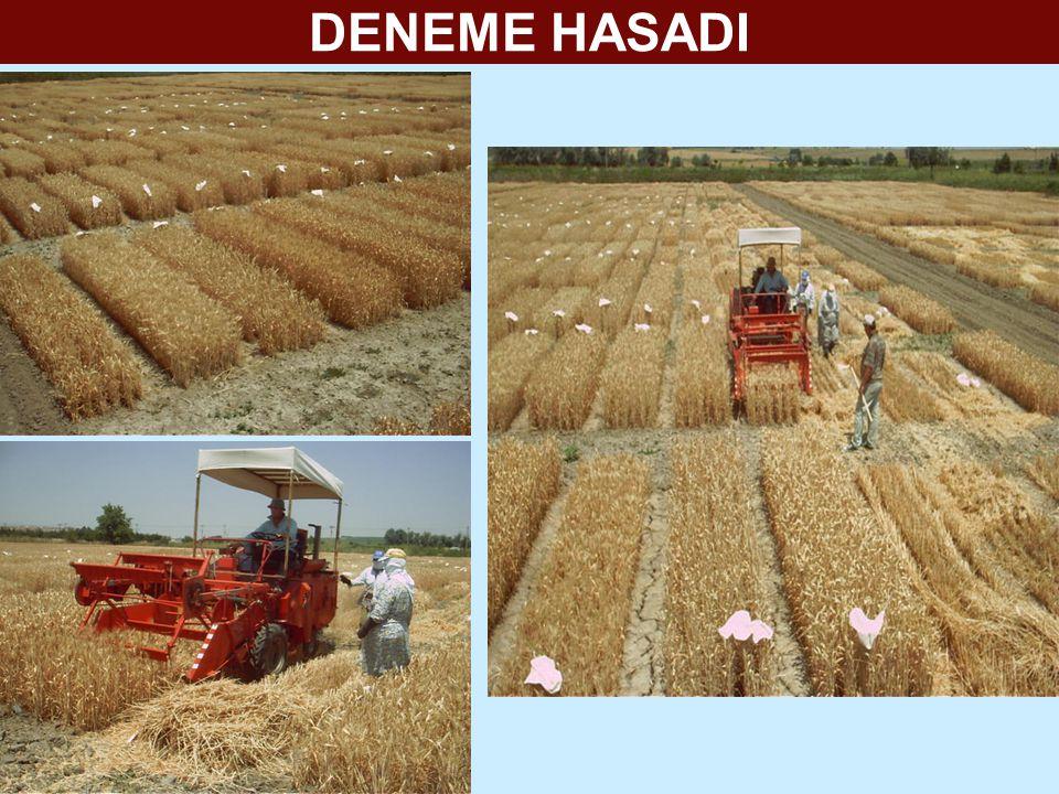 DENEME HASADI
