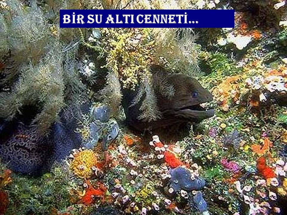 BİR SU ALTI CENNETİ...
