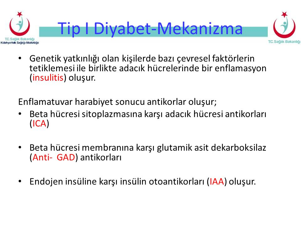 Tip I Diyabet-Mekanizma