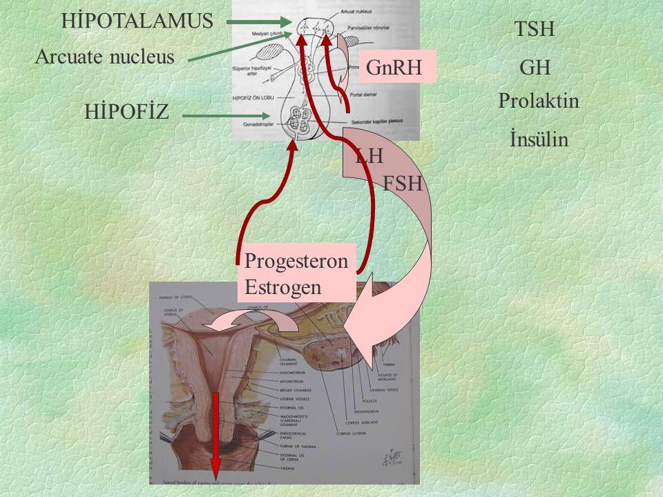 HİPOTALAMUS TSH Arcuate nucleus GnRH GH Prolaktin HİPOFİZ İnsülin LH FSH Progesteron Estrogen