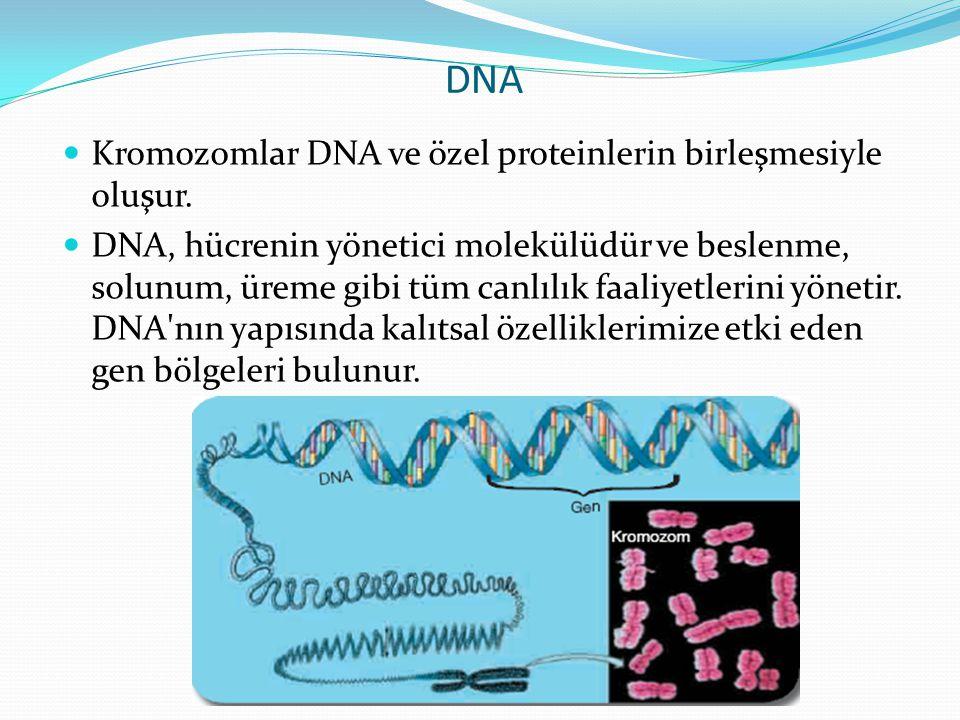 DNA Kromozomlar DNA ve özel proteinlerin birleşmesiyle oluşur.