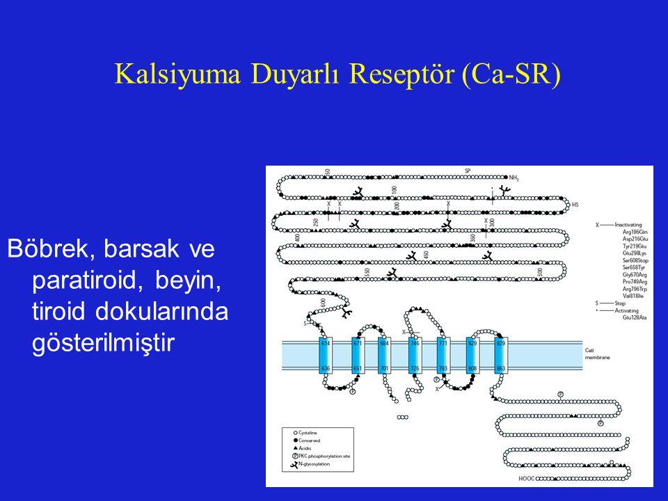 Kalsiyuma Duyarlı Reseptör (Ca-SR)