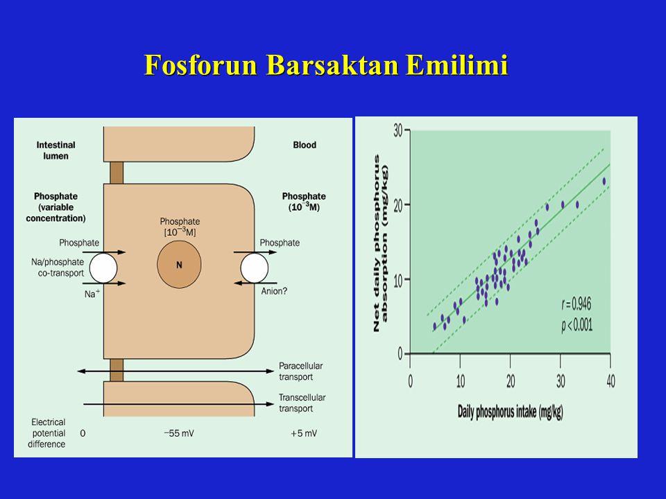 Fosforun Barsaktan Emilimi