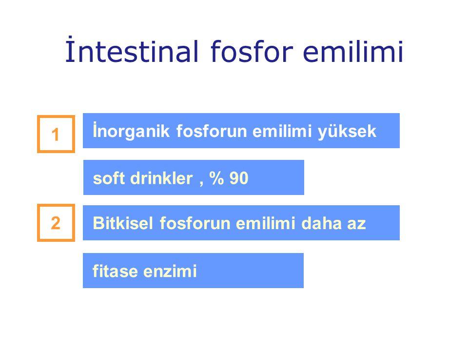 İntestinal fosfor emilimi