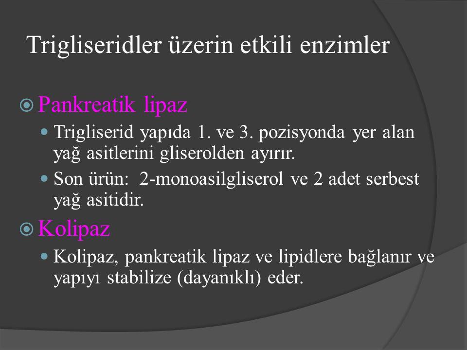 Trigliseridler üzerin etkili enzimler