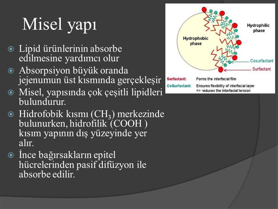 Misel yapı Lipid ürünlerinin absorbe edilmesine yardımcı olur