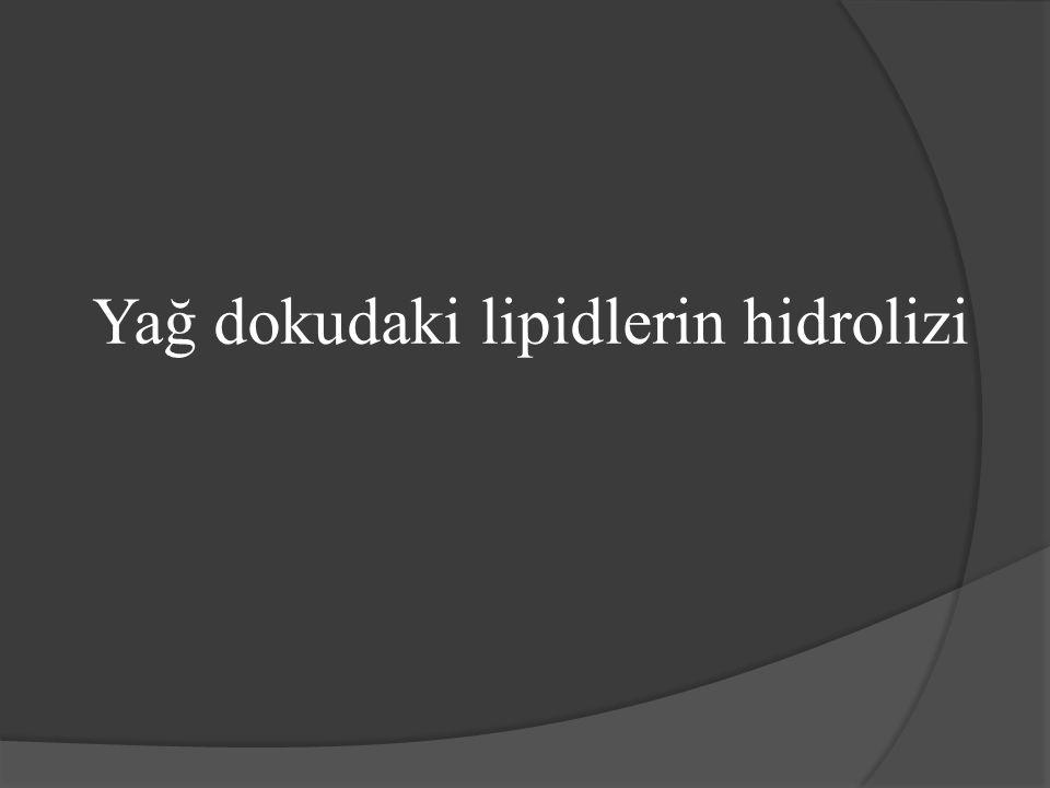 Yağ dokudaki lipidlerin hidrolizi