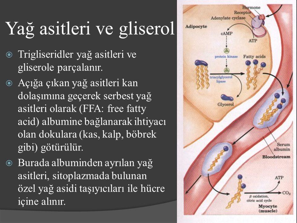 Yağ asitleri ve gliserol