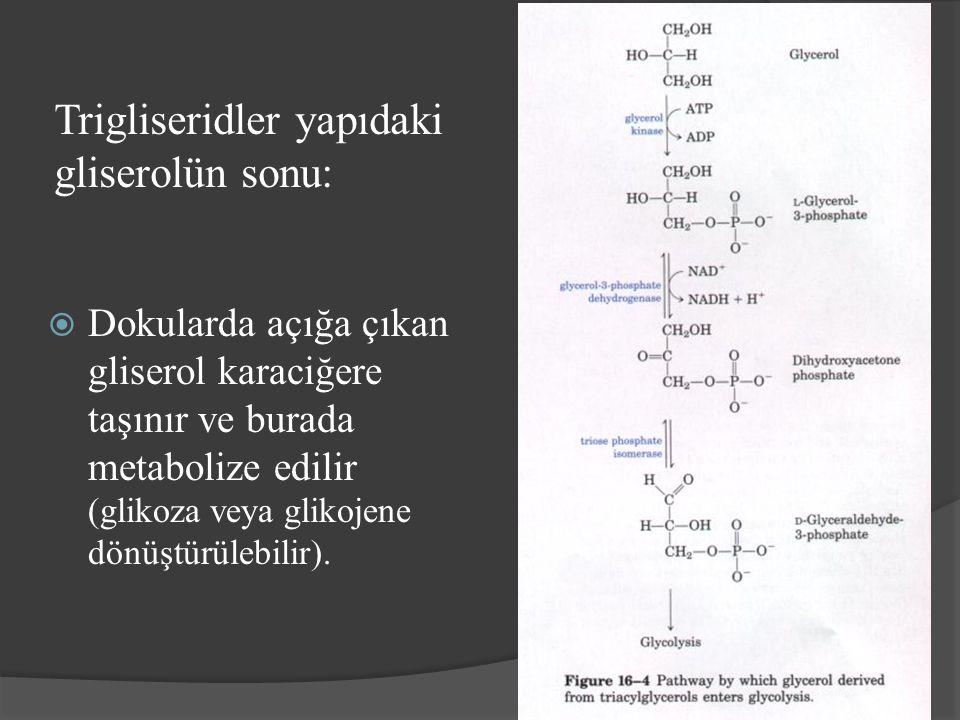 Trigliseridler yapıdaki gliserolün sonu: