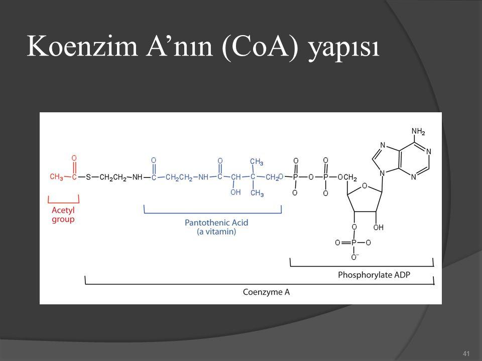 Koenzim A'nın (CoA) yapısı