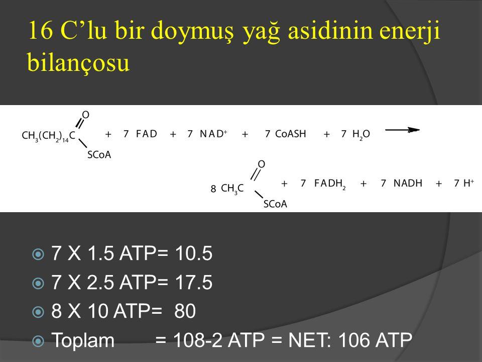 16 C'lu bir doymuş yağ asidinin enerji bilançosu