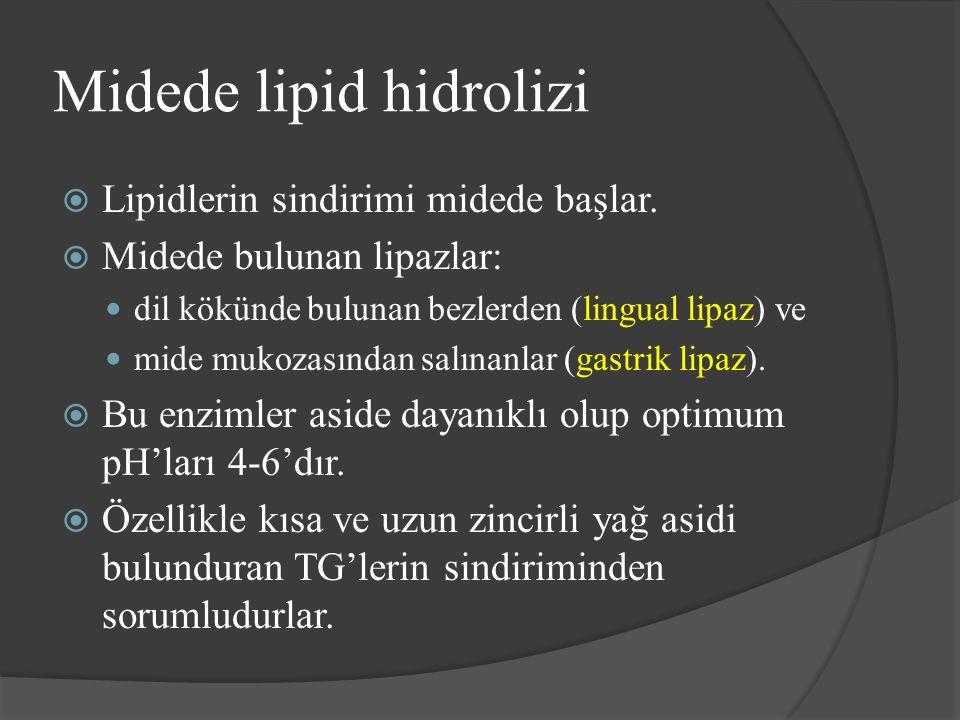 Midede lipid hidrolizi