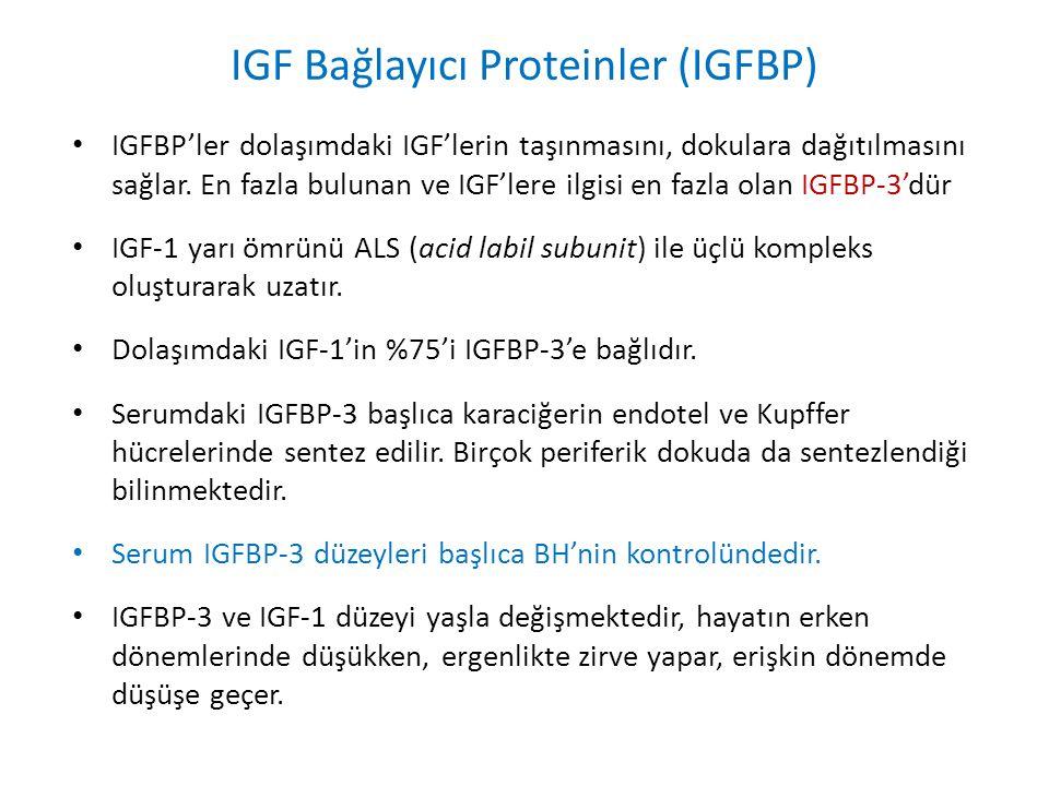 IGF Bağlayıcı Proteinler (IGFBP)