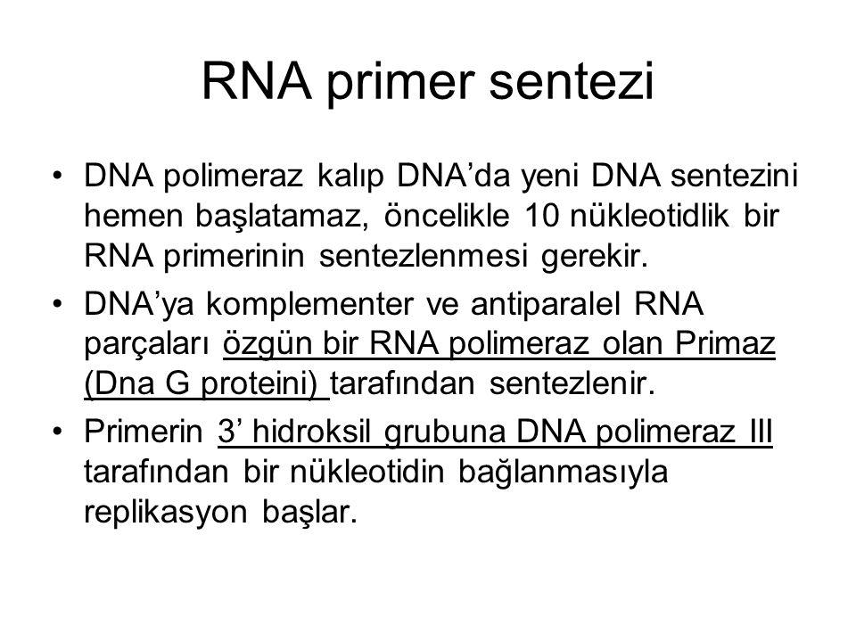 RNA primer sentezi