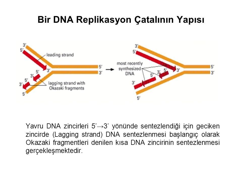 Bir DNA Replikasyon Çatalının Yapısı