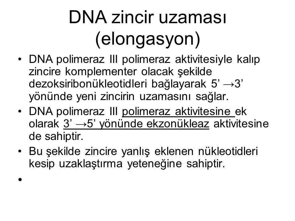 DNA zincir uzaması (elongasyon)