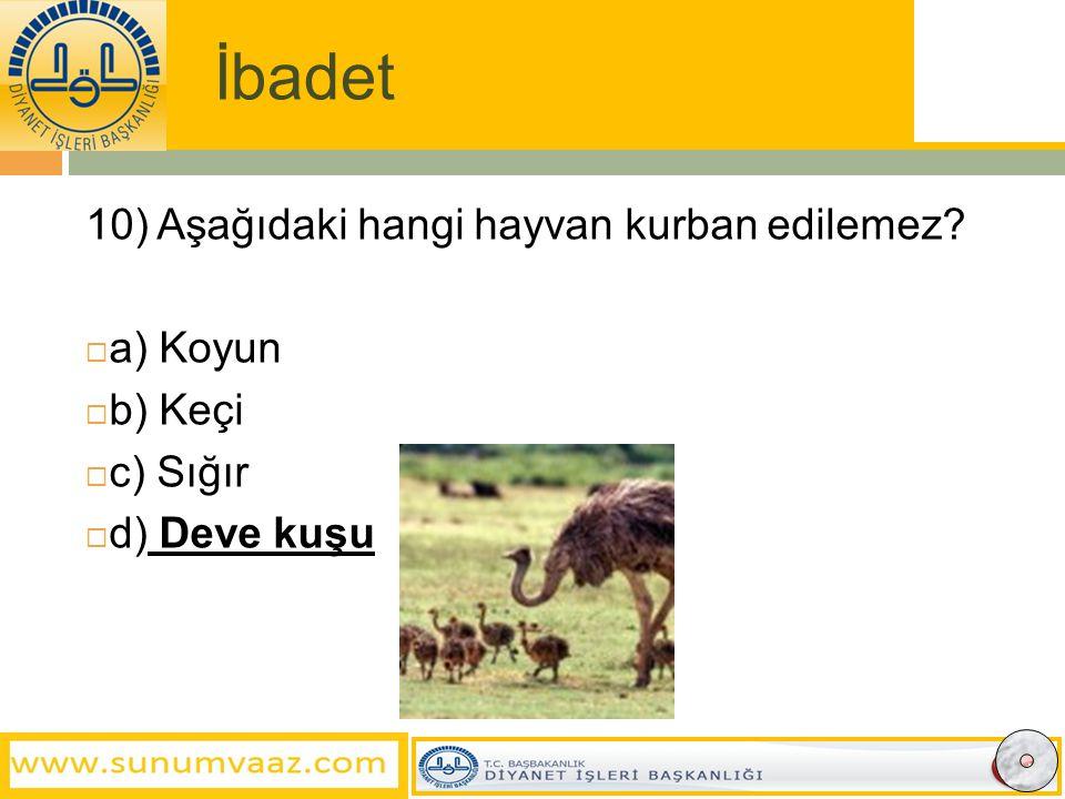 İbadet 10) Aşağıdaki hangi hayvan kurban edilemez a) Koyun b) Keçi