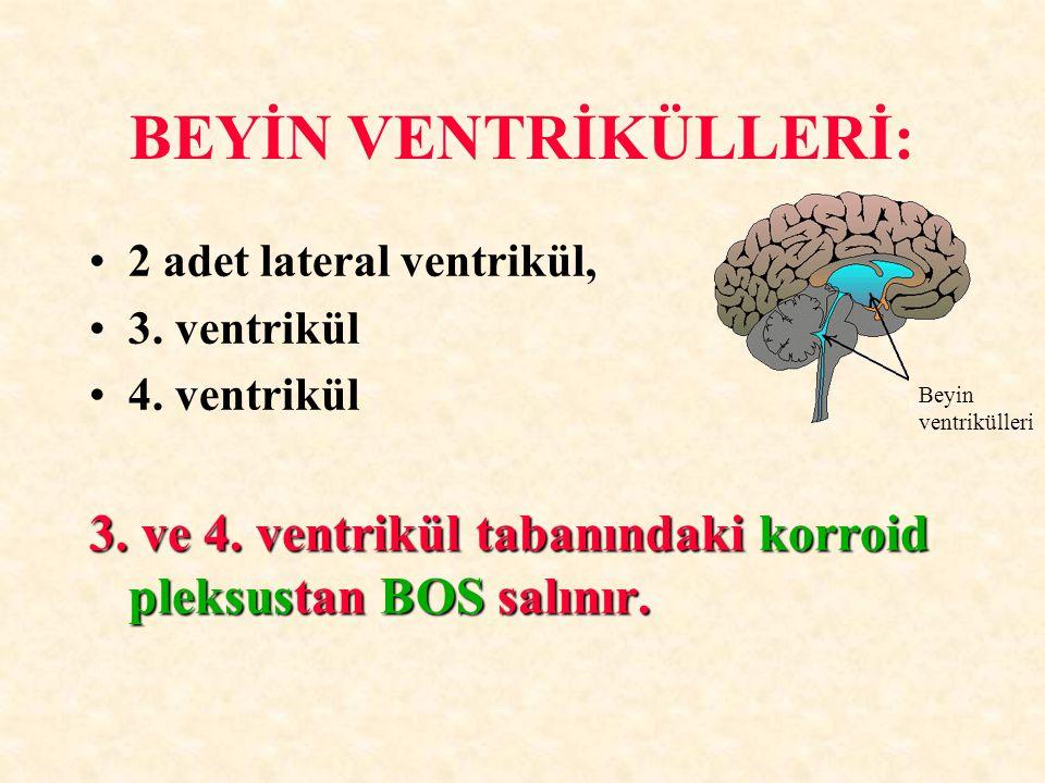 BEYİN VENTRİKÜLLERİ: 2 adet lateral ventrikül, 3. ventrikül. 4. ventrikül. 3. ve 4. ventrikül tabanındaki korroid pleksustan BOS salınır.