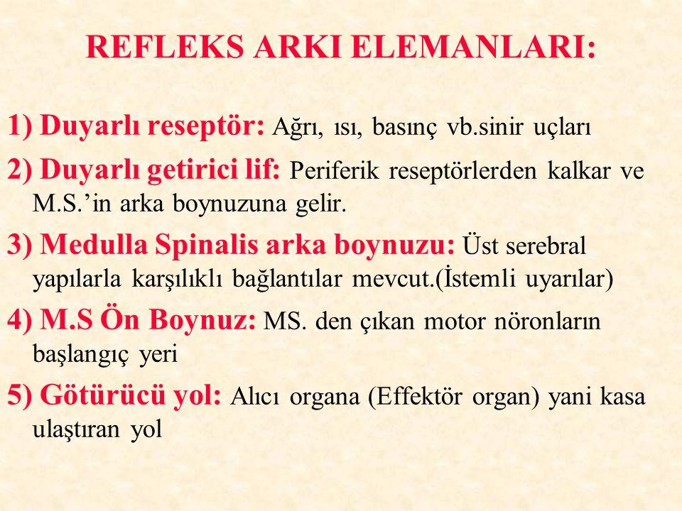 REFLEKS ARKI ELEMANLARI: