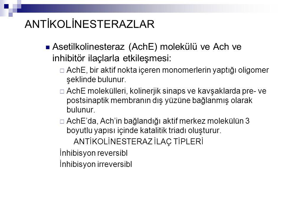 ANTİKOLİNESTERAZLAR Asetilkolinesteraz (AchE) molekülü ve Ach ve inhibitör ilaçlarla etkileşmesi: