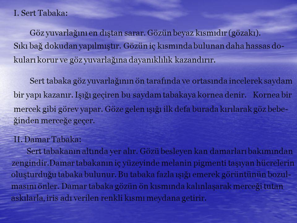 I. Sert Tabaka: Göz yuvarlağını en dıştan sarar