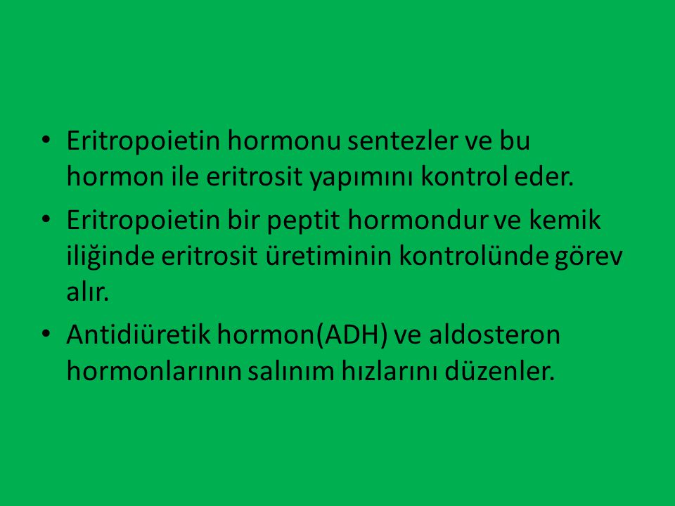Eritropoietin hormonu sentezler ve bu hormon ile eritrosit yapımını kontrol eder.