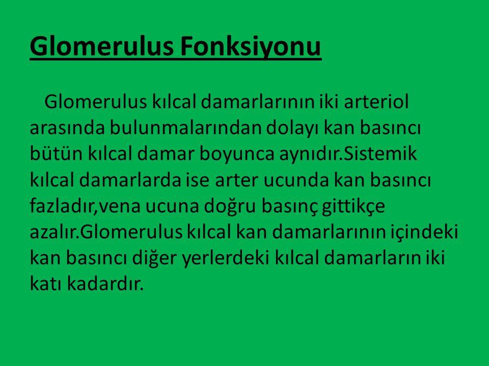 Glomerulus Fonksiyonu